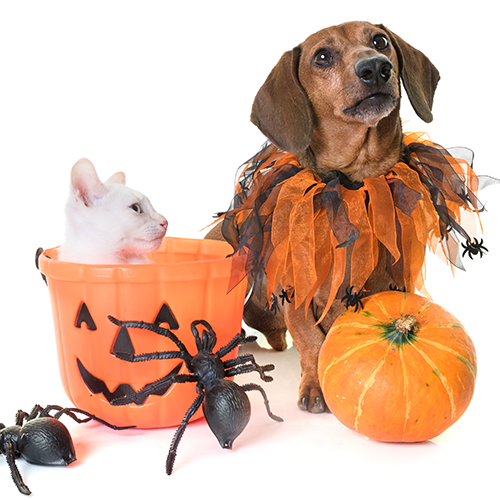 Consejos de Halloween para perros y gatos