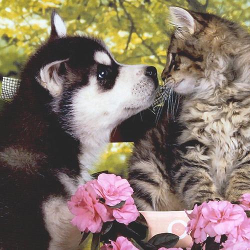 Las alergias de primavera en perros y gatos